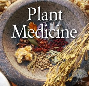 an image with a different medicine plant inside the rock bowl with a with a white text in the middle plant medicine